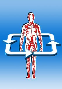 rebounding benefits cardiovascular system